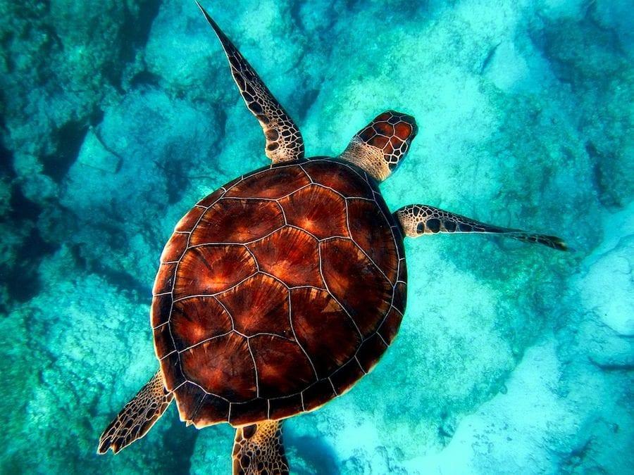 zee schildpad