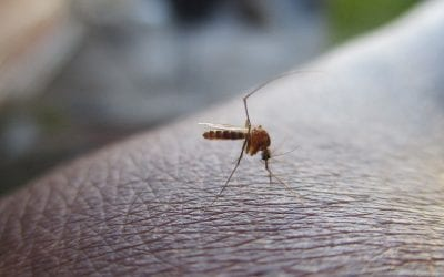 Malaria in Zuid-Afrika