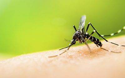 Dengue of knokkelkoorts